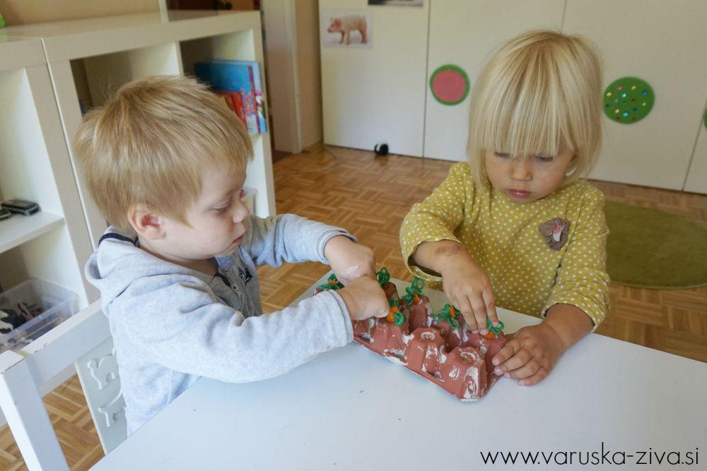 Sajenje korenčkov iz kosmatih žičk