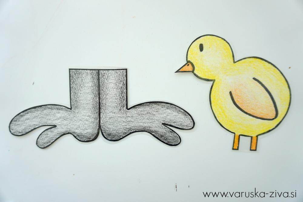 Piščanček pik - Velika črna noga