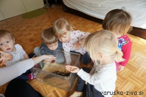Spoznavanje žabe