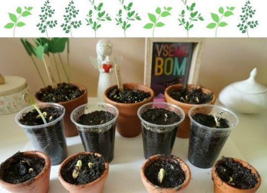 Vrtnarjenje z otroki