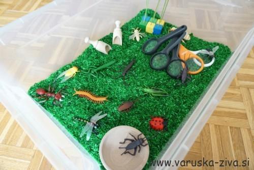 Senzorična škatla - žuželke
