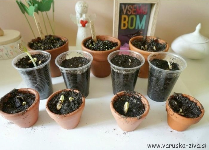Vrtnarjenje z otroki - enostavne pomladne aktivnosti za otroke
