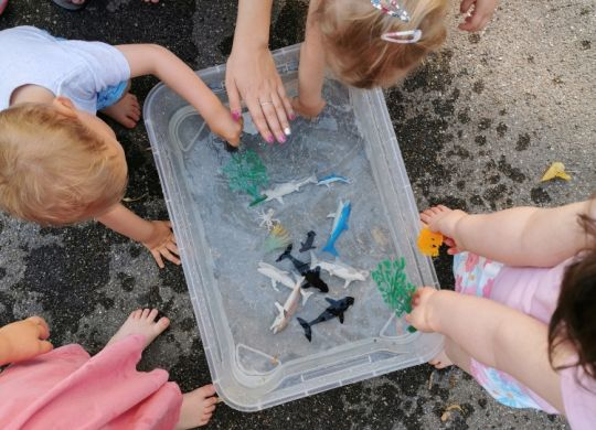 Igra z vodo in morskimi živalmi