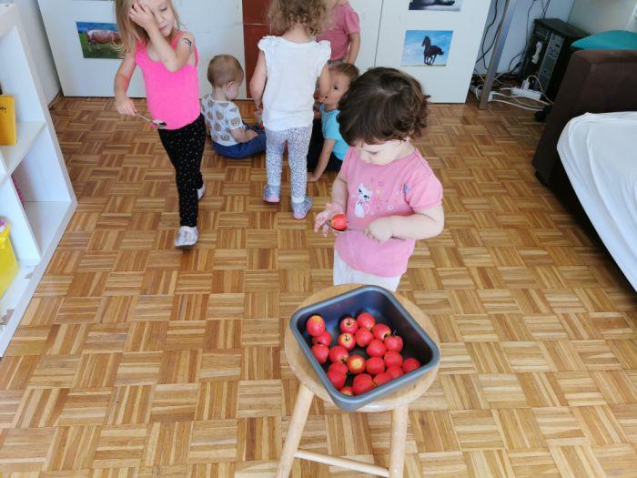 Prenašanje jabolk v košare