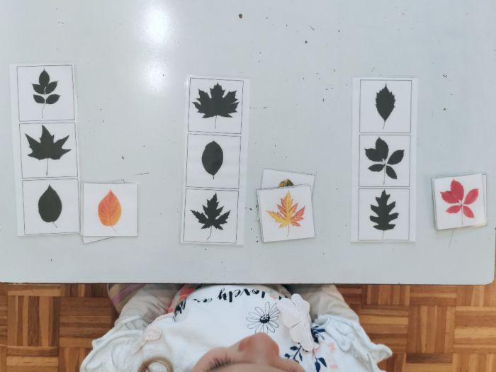 sence listkov
