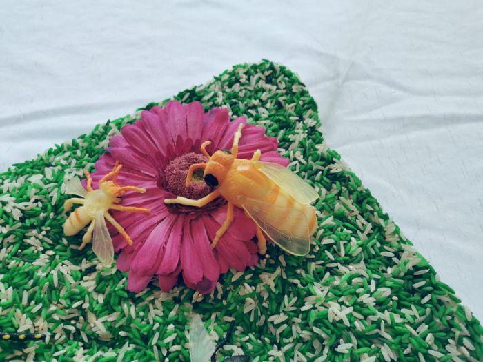 Senzorična škatla: žuželke